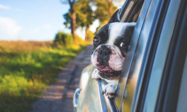 Viajar con mascotas en furgoneta | Alquiler de furgonetas en Madrid